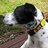 LuckyPet Pet ID Tag: Collar Tag - Attaches Flat