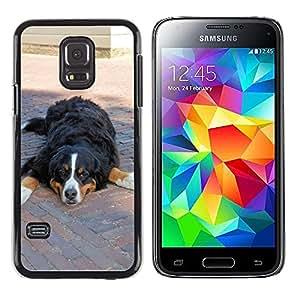 GoGoMobile Slim Protector Hard Shell Cover Case // M00118016 Bernese Mountain Dog Pedigree Pet Dog // Samsung Galaxy S5 MINI SM-G800