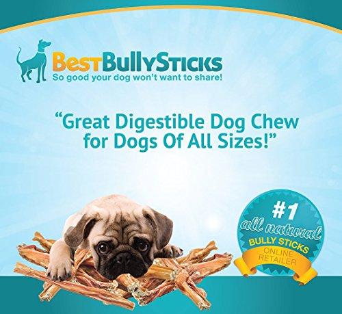 Best Bully Sticks Natural 12 Inch Junior Beef Bladder Sticks (20 Pack) Dog Treats By