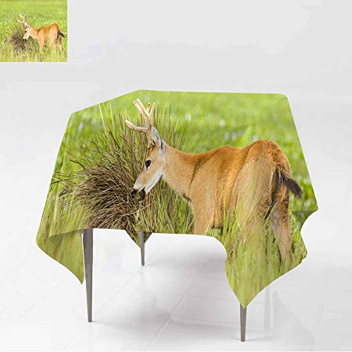 AFGG Spill-Proof Table Cover,Male Marsh Deer (Blastocerus dichotomus) 4,Party Decorations Table Cover Cloth,50x50 Inch