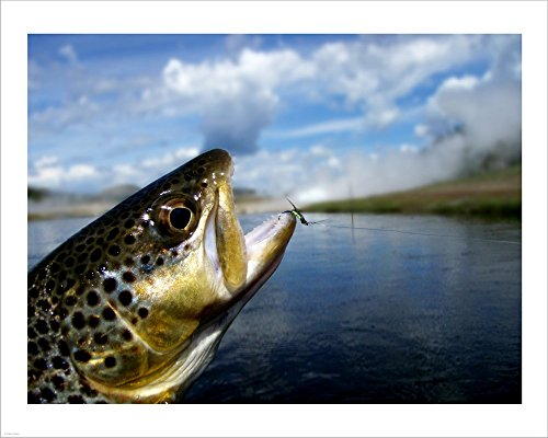 (Brown Trout and Soft Hackle Nymph Laminated Art Print, 23 x 18 inches)