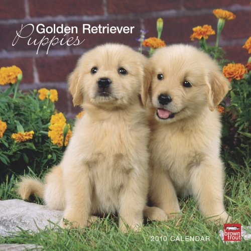 Golden Retriever Puppies 2010 Square Wall (Multilingual Edition)