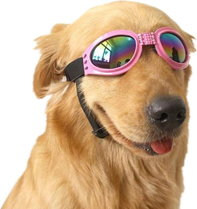 Image result for sunglasses dog