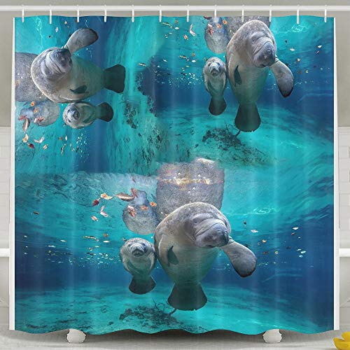 Huangwei Manatees Anna Maria Island Shower Curtain for sale  Delivered anywhere in USA
