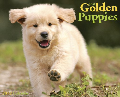 Just Golden Puppies 2012 Calendar (Just (Willow Creek))
