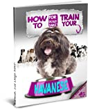 Training Your Havanese Dog - House Training - Barking - Leash - Nipping