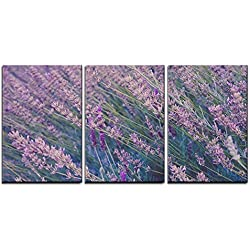 "wall26 - 3 Piece Canvas Wall Art - Closeup of Lavender Flowers Field - Modern Home Decor Stretched and Framed Ready to Hang - 16""x24""x3 Panels"