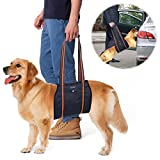 Dog Lift Harness, PETBABA Mobility Rehabilitation Sling Support Harness with Handle for Elder Dog Especially for Aid Injury and Arthritis XL