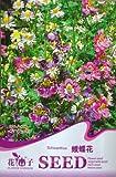 2018 Hot Sale!! 1 Original Pack, 30 Seeds Schizanthus Pinnatus Salpiglossia Sinuata Poor Man's Orchid Salpiglossis #A037