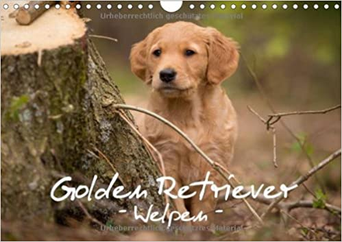 Golden Retriever Welpen Author Auerbach Anna 9783660446036