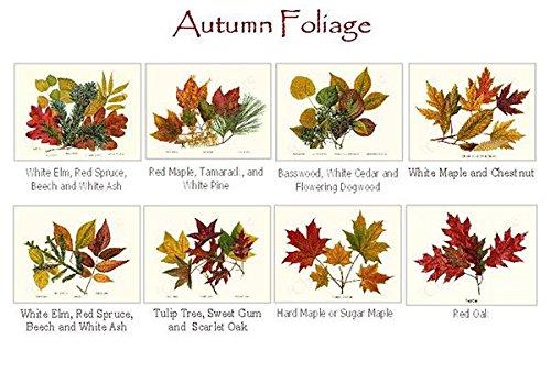 Autumn Foliage Note Cards