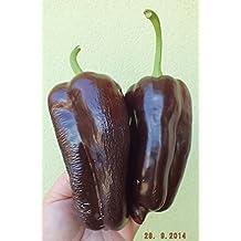 Rare Chocolate Sweet Bell Pepper СARAMEL 10 or 20 Russian Heirloom Organic Seeds