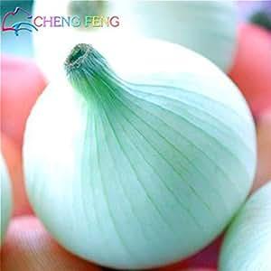 Nueva delicioso caliente 100pcs Semillas de cebolla gigante Orgánica Inicio Vehículos Para Jardín interés de bricolaje de la herencia Bonsai plantas con flores de semillas
