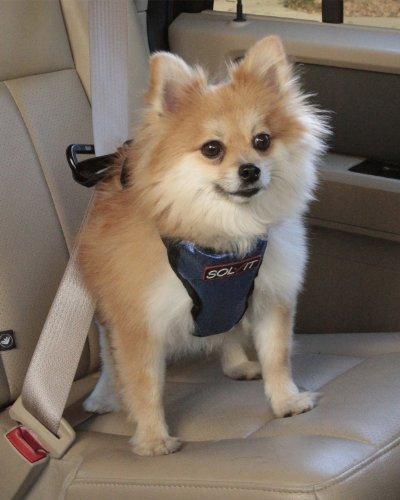 Solvit Petsafe Deluxe Car Safety Dog Harness Adjustable Crash