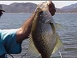 Fishing with the King of Crappie fishing Kurt Rambo