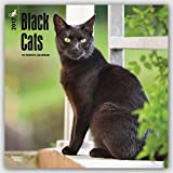 img - for Black Cats 2017 Square (Multilingual Edition) book / textbook / text book