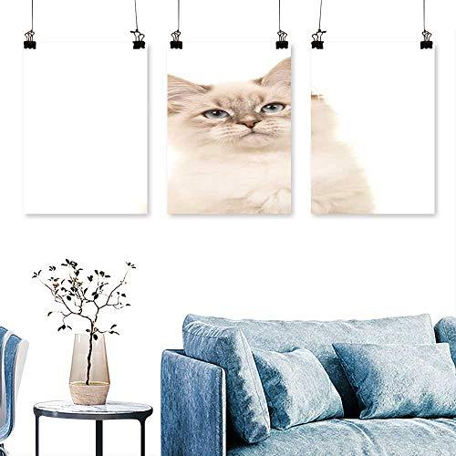 SCOCICI1588 3-Piece Modern Portrait bir Kitten cat Blue Eyes on a White backgroun Print On Canvas No Frame 24 INCH X 40 INCH X 3PCS