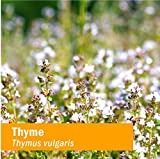 Herb Pharm Certified Organic Thyme Liquid Extract