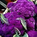 Violetta Italia Cauliflower Seeds (Organic) 180 Seeds Upc 647923989229