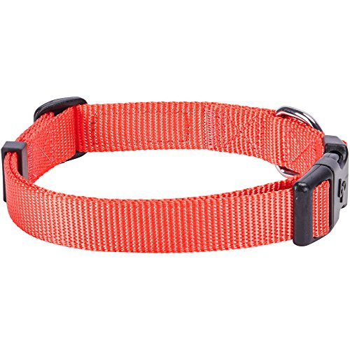 Image of Blueberry Pet 32 Colors Classic Dog Collar, Hot Coral, Small, Neck 12