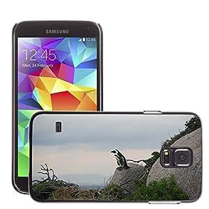 Etui Housse Coque de Protection Cover Rigide pour // M00109672 Sudáfrica pingüino Pájaro de Vida // Samsung Galaxy S5 S V SV i9600 (Not Fits S5 ACTIVE)