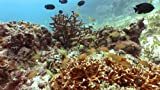 Plasmaquarium: Vol. Two - Ultra Coral Reef Aquarium (Widescreen)