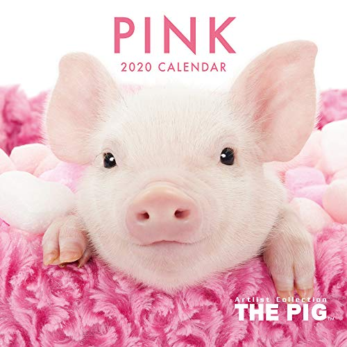 Guinea Pigs 2001 Calendar - The Pig Pink Wall Calendar 2020