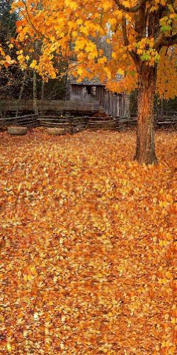 GladsBuy Fallen Leaves 10 x 20 Computer Printed Photography Backdrop Autumn Theme Background DGX-207