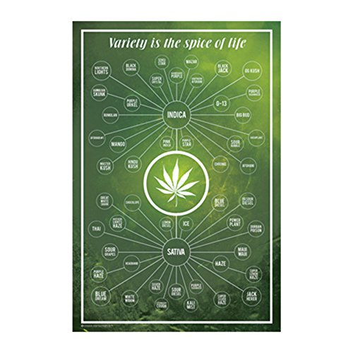 Cannabis - Variety is the Spice of Life Poster (24x36) PSA010735 by Frame USA