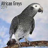 African Grey Calendar - African Grey Parrot Calendar - Parrot Calendar - Calendars 2018 - 2019 Wall Calendars - Bird Calendars - Monthly Wall Calendar by Avonside