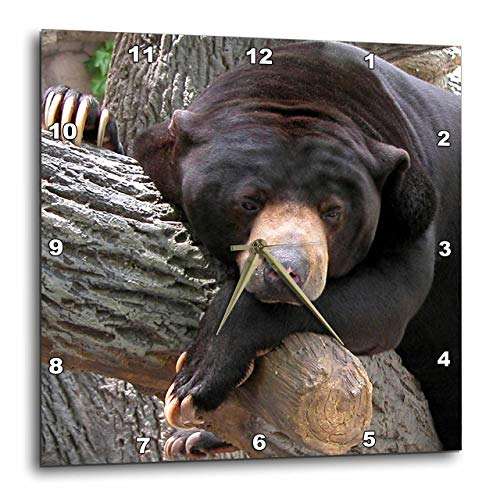 3dRose Beverly Turner Photography Oh Man What a Day Black Bear Wall Clock, 10 by 10-Inch Bears Dimension Wall Clock