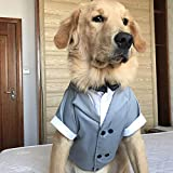 WHZWH Small Dog Wedding Shirt,Puppy Formal Tuxedo Multiple Colors White Gray Blue Brown can be Chosen with Black Bow tie and red Bow tie Cotton Fabric,Blue,M