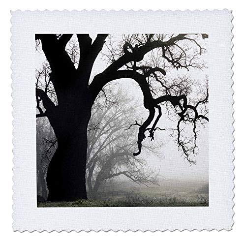 3dRose Danita Delimont - Trees - USA, California, Shell Creek. Silhouette of oak tree in fog. - 16x16 inch quilt square (qs_314660_6) -
