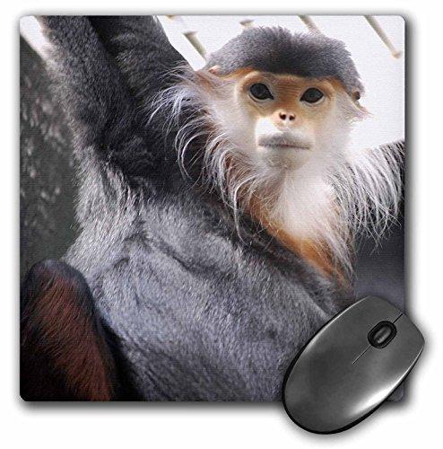 3dRose LLC 8 x 8 x 0.25 Inches Douc Langur Monkey Mouse Pad (mp_3879_1)