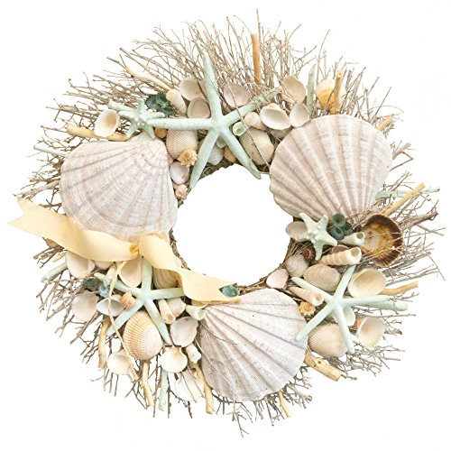 Coastal-Exotic-Ocean-Shore-Seashell-Bundle-1-Set