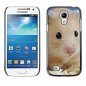 Print Motif Coque de protection Case Cover // M00312896 Cisne del pájaro del estanque de agua // Apple iPhone 5 5S 5G