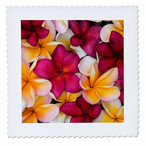 3dRose Danita Delimont - Flowers - USA, Hawaii, Maui, Plumeria in mass display - 16x16 inch quilt square (qs_259253_6) by 3dRose