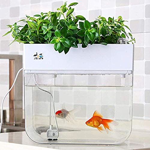 Mini Aquaponic Ecosystem Fish Tank Hydroponic Cleaning Tank Fish Feeds Plants Great Gardening & Family Project