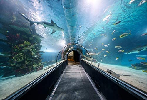 10x8ft Hallway at Large Aquarium Backdrop Vinyl Underwater World Backgroud Clear Blue Ocean Tropical Fishes Coral Reef Summer Holiday Marine Theme Party Banner Children Adult Portraits