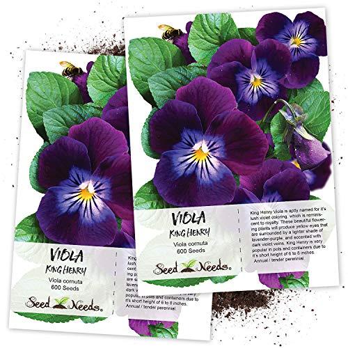 Seed Needs, King Henry Viola (Viola cornuta) Twin Pack of 600 Seeds Each