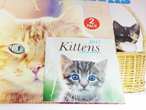 2017 Kittens Cats 12 month Wall Calendars - Mini Kittens Calendar Bundle Coon Shorthair Siamese Blue Siberian More