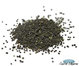 Silkworm Eggs - Bombyx Mori - Normal (250 Eggs)
