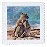 3dRose Andrea Haase Animals Illustration - Baboon Mother With Child Watercolor Illustration - 22x22 inch quilt square (qs_268152_9)