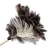 Boardwalk 13FD Professional Ostrich Feather Duster 7'' Handle