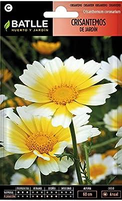 Semillas de Flores - Crisantemo Jardín Flor Grande variado - Batlle: Amazon.es: Jardín