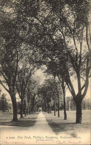 (Elm Arch, Phillip's Academy Andover, Massachusetts Original Vintage Postcard )