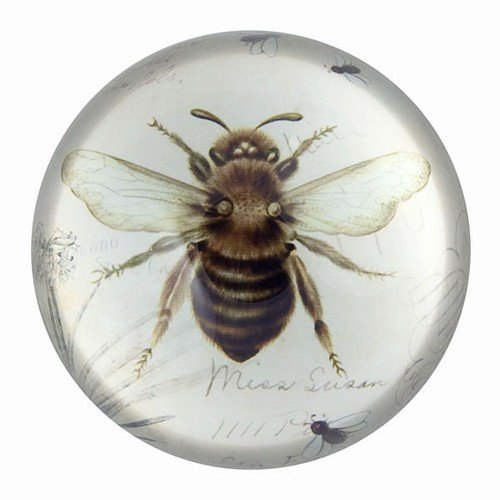 Nature Under Glass Paperweights (Bee Print)