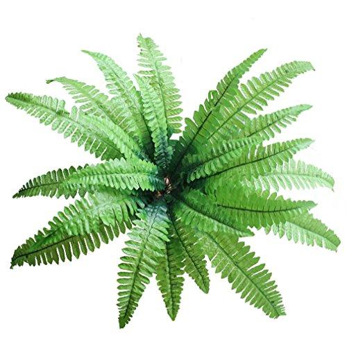 fern bush - 2