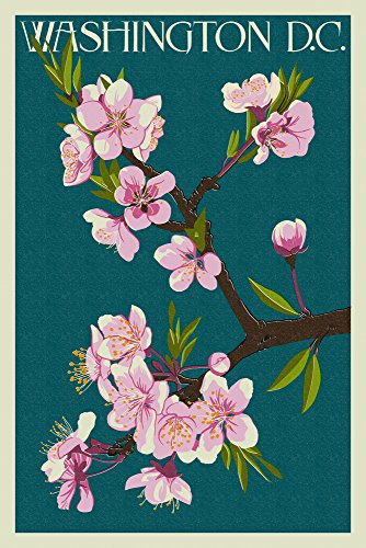 Cherry Blossoms - Washington DC (16x24 Giclee Gallery Print, Wall Decor Travel Poster)