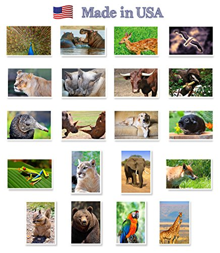 ANIMALS & BIRDS postcard set of 20. Post card variety pack with wild and domestic animal and bird theme postcards. Made in USA.